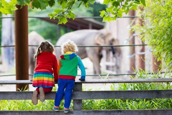 Hvor skal vi hen i dag? Ja, man kan fx tage i zoologisk have og se spændende dyr.